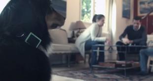 weenect collier connecte pour chien2